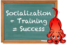 Socialization + Training = Success