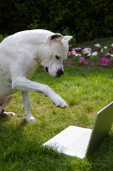 Dog using a computer